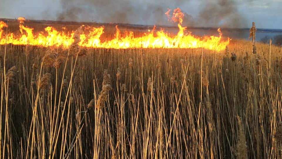 Самовільне випалювання рослинності та її залишків – заборонено!