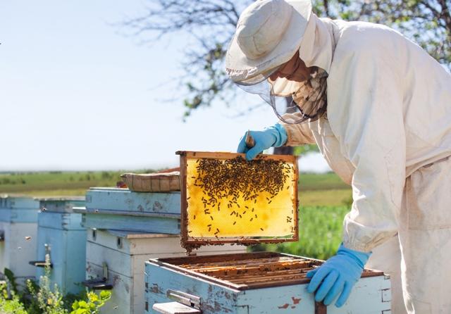 Передбачено виплату спеціальної бюджетної дотації за наявні бджолосім'ї